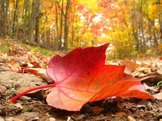 otoño_01