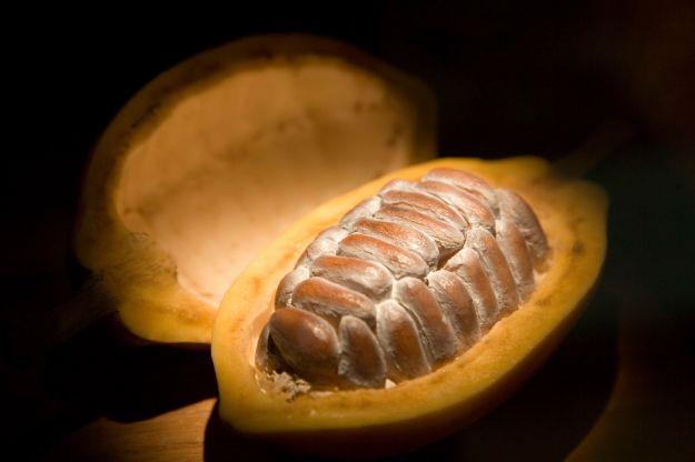 cacao02