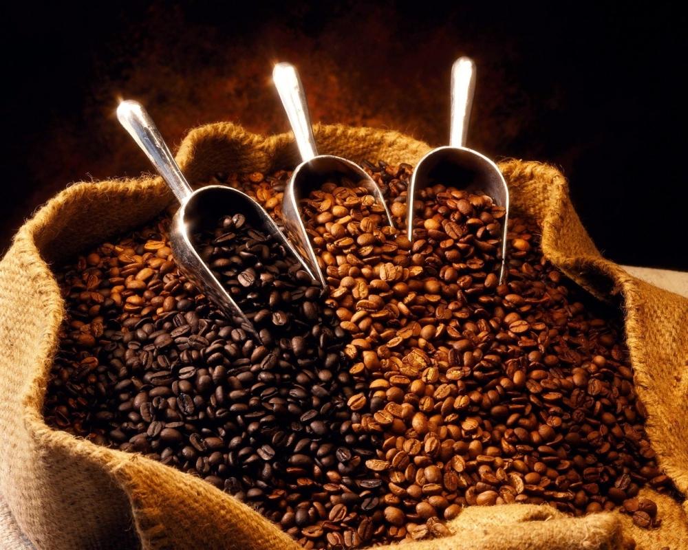 Todo sobre el Café y el Cacao (3/5)