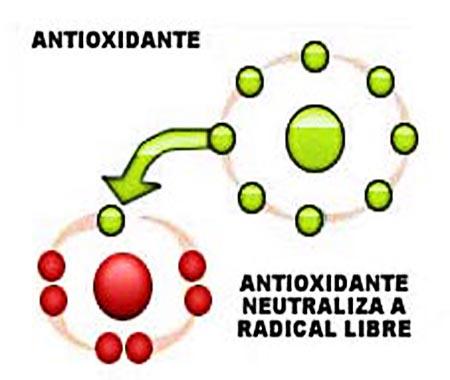 arandano04